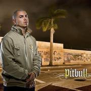 Pitbull Wallpapers Photos Pictures WhatsApp Status DP Ultra HD Wallpaper