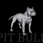 Pitbull Wallpapers Photos Pictures WhatsApp Status DP 4k Wallpaper